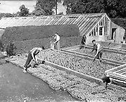 15/07/1958<br /> 07/15/1958<br /> 15 July 1958<br /> <br /> Edmundsbury Farm, Lucan, Co. Dublin<br /> <br /> <br /> St Edmundsbury is an acute psychiatric unit set in its own grounds just outside the village of Lucan, situated near the M50/N11 interchange and some five miles from its parent hospital St Patrick's. It was purchased by the Governors of St Patrick's in 1899 and initially served as a convalescent facility. In the early days the house was only able to accommodate 15 female patients but the surrounding farm produced food for the main hospital and raised funds by selling on surplus produce. A brochure from 1928 describes the building in 1907 of a 'Gentlemen's Villa' at St Edmundsbury to accommodate 'eight gentlemen patients' where 'Croquet and tennis courts are provided and a motor car is maintained for the use of the patients'.<br /> <br /> In the 1980's the building of a new purpose designed accomodation block of forty four single rooms and 3 double rooms allowed for the renovation of the old house into communal and treatment areas.