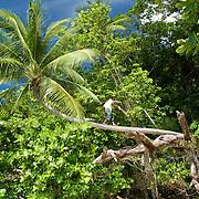 Boy climbing a coconut tree.