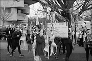 BRAS HANGING FROM TREE, , , Womens's March on  Washington DC. 21 January 2017