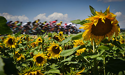 July 21, 2018 - Mende, FRANCE - A field of sunflowers pictured during the 14th stage in the 105th edition of the Tour de France cycling race, from Saint-Paul-Trois-Chateaux to Mende (188km), France, Saturday 21 July 2018. This year's Tour de France takes place from July 7th to July 29th. BELGA PHOTO DAVID STOCKMAN (Credit Image: © David Stockman/Belga via ZUMA Press)