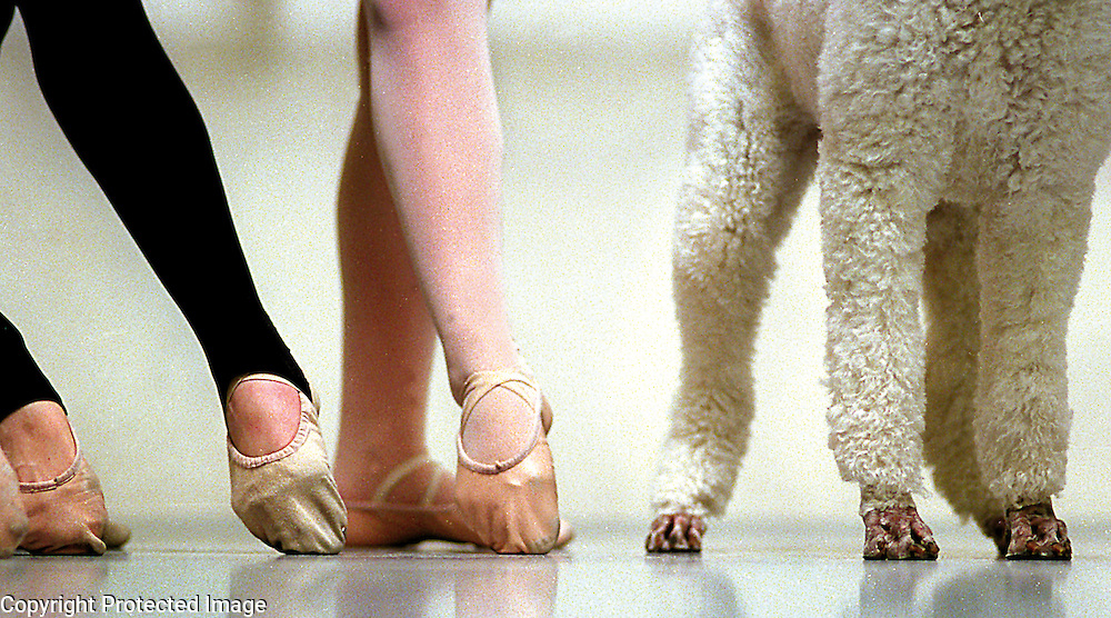 Arielle Poodelle, a standard poodle, takes her place with members of Santa Cruz Ballet Theater during her audition for the part of the manor hound in the company's production of 'Giselle'.<br /> Photo by Shmuel Thaler <br /> shmuel_thaler@yahoo.com www.shmuelthaler.com