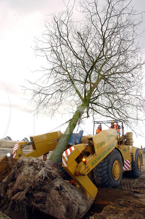 060405, hardenberg, ned<br /> Plaatsen bomen bij de bredeschool.<br /> fotografie frank uijlenbroek©2006 frank uijlenbroek