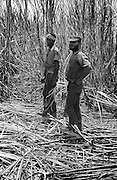 Cane Workers