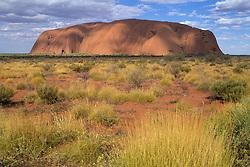 Australia, Uluru-Kata Tjuta National Park, Ayer's Rock (also known as Uluru) and spinifex grass