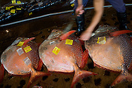 Naha fish market opens every day from 6 to 9 AM providig fresh food for most of the island restaurant and pescherie