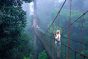 Forest canopy walkway, Danum Valley Rainforest Preserve, Borneo, Malaysia.