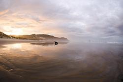 Sandfly Point, Otago Peninsula, New Zealand Sea Lion Phocarctos hookeri