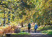 © Licensed to London News Pictures. 28/10/2014. Godalming, UK Visitors to Winkworth Arboretum in Godalming, Surrey enjoy autumnal views in the famous woodland, planted to be enjoyed at its very best in Autumn. . Photo credit : Stephen Simpson/LNP