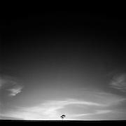 Lone Tree, Muswellbrook, Hunter Valley, Australia