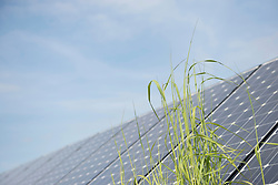 Blade of grass in front of solar panel