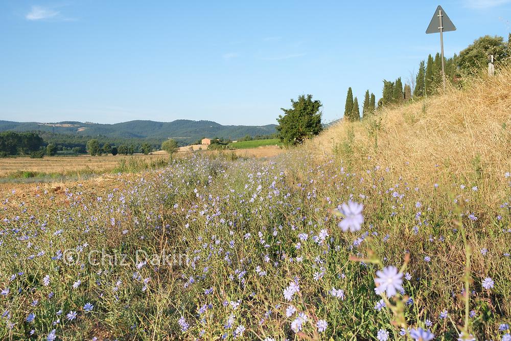 Tuscan countryside near Sinalunga