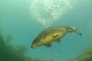 Aquatic Invasive Species Collection