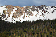 The remains of a large slab avalanche are visible on a slope of Bowen Mountain above a pine forest riddled with trees killed by a bark beetle outbreak in Baker Gulch, Never Summer Wilderness, Colorado.
