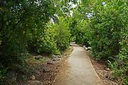 Israel, Upper Galilee, Dan river [a tributary of the Jordan River] in the Tel Dan nature reserve