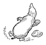 (Mole throwing rock - illustration)