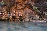 The Virgin River at Zion National Park, Utah, USA