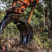 Noosa, Sunshine Coast, Deforestation