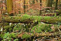 Corkova Uvala, the virgin forest, in autumn, Plitvice National Park, Croatia