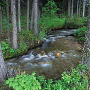 Small stream flowing through Bridger mountains of the Rocky mountains. Summer.