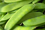 Close up selective focus photograph of a group of Snow peas