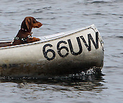 A canoe with an excellent dog's-eye-view paddles toward the Arboretum in Seattle, oppressively hot dog days of summer eventually gave way to seasonably perfect temperatures. (Ken Lambert / The Seattle Times)