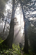 Hiking in the Greywolf Valley - Olympic National Park - Washington State