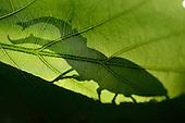 Wildlife on Oak | Eiche