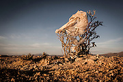 11/11/2014 - Uyuni, Bolivia: Plastic tree #60. Plastic bags are part of the landscape of the Bolivian Altiplano. The accumulation of plastic bags on the environment cause deterioration of the landscapes and agriculture soils and it is associated to the death of domestic and wild animals.