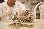 Serra da Capivara_PI, Brasil...Imagens do Parque Nacional da Serra da Capivara. Na foto artefatos e ossos sendo analisados no Laboratorio Litico do Centro Cultural Sergio Motta, ligado a Fundacao Museu do Homem Americano (Fumdham)...Serra da Capivara National Park in Sao Raimundo Nonato, Piaui. In the photo artifacts and bones were analyzed in the lithic laboratory Sergio Motta Cultural Center, on the Museum Foundation of the American Man (Fumdham)..Foto: ALEXANDRE BAXTER / NITRO