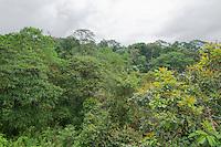 Rainforest at San Jorge Eco-Lodge, Milpe, Ecuador
