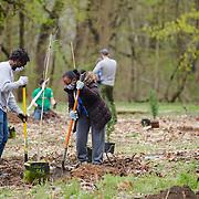 20210410 Trolley Trail Tree Planting tif2
