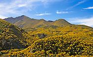 Alpine Highway, New Zealand