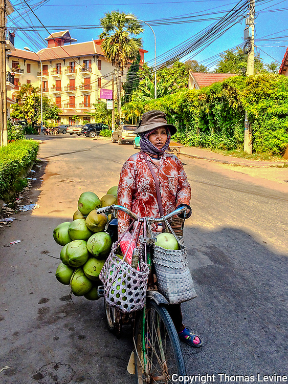 Cambodian Lady working with her bicycle deliverying  coconuts. She walks her bike down the streets with it loaded down with coconuts. iPhone