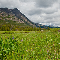 Willows and wildflowers grow in a meadow below Barronette Peak in Yellowstone National Park, Wyoming.