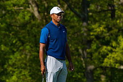 May 16, 2019 - Farmingdale, NY, U.S. - FARMINGDALE, NY - MAY 16: Tiger Woods of the United States awaits his turn to putt on the 12th green during Round One of the PGA Championship Tournament on May 16, 2019, at Bethpage State Park in Farmingdale, NY (Photo by John Jones/Icon Sportswire) (Credit Image: © John Jones/Icon SMI via ZUMA Press)