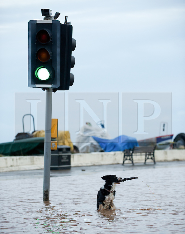 © Licensed to London News Pictures. 27/01/2013..Cleveland, England, UK..Following the recent snowfall a fast thaw through the night brought heavy flooding to some parts of Cleveland and North Yorkshire with many roads closed...Meg the Collie enjoys some of the flood water at Saltburn...Photo credit : Ian Forsyth/LNP