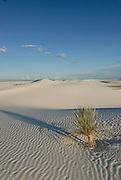 A lonely bush in the rippled gypsum, sand dunes in the White Sands National Monument, New Mexico, USA