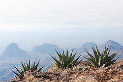 Three Century Plants and view from South Rim of Chisos Mountains into Mexico, Big Bend National Park, Texas, USA.