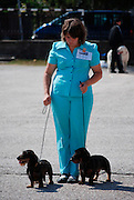 Bulgaria, Bansko, woman presenting her two dackel wirehair dogs at the National Dog Competition August 30 2008