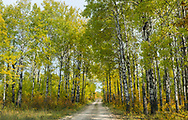 Early autumn colours along a forest road in Riding Mountain National Park, Manitoba, Canada