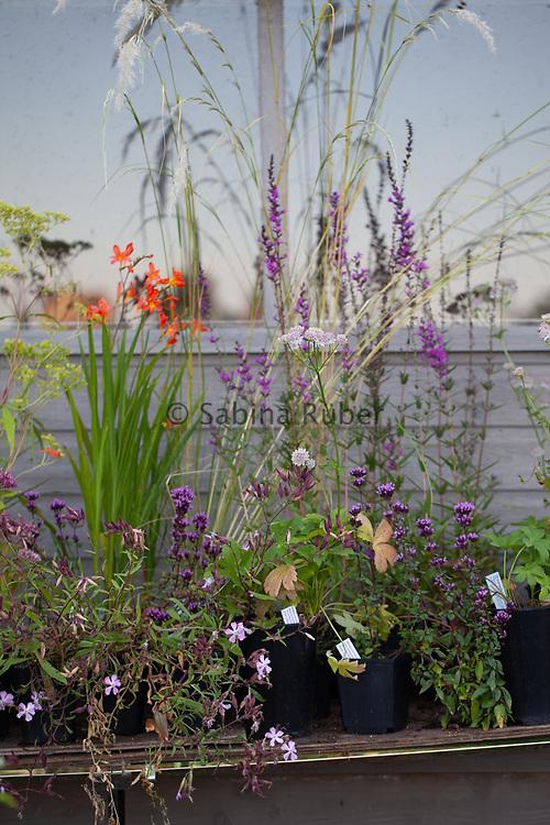 Plants for sale,  Wildegoose Nursery, Shropshire