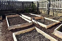 Life in coronavirus lockdown in the UK April 2020. Man digs up his back garden to make raised vegetable beds.  Model released.