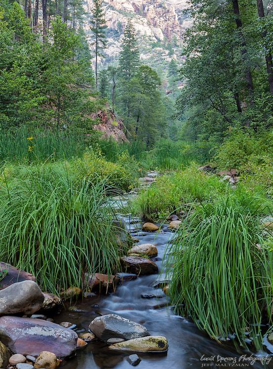 Meandering creek flow in West Fork, Oak Creek Canyon, Sedona