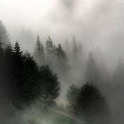 Nuvole in pineta sulle Dolomiti