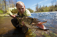 Angler Drew Price hoists a large fly caught muskie on a tributary of Lake Champlain, New York