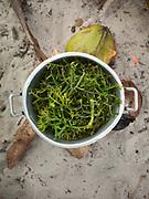 Anita cooking seaweed for lunch. On Maiga island.