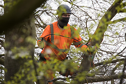 An ecologist working on behalf of HS2 Ltd examines a tree in ancient woodland at Jones Hill Wood for evidence of bat activity on 28th April 2021 in Wendover, United Kingdom. Felling of Jones Hill Wood, which contains resting places and/or breeding sites for pipistrelle, barbastelle, noctule, brown long-eared and natterer's bats and is said to have inspired Roald Dahl's Fantastic Mr Fox, has recommenced after a High Court judge yesterday refused environmental campaigner Mark Keir permission to apply for judicial review and lifted an injunction on felling for the HS2 high-speed rail link.