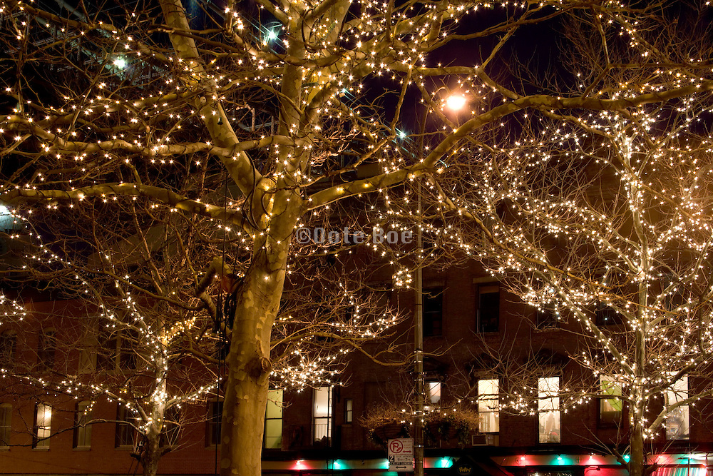 atmospheric outside Christmas tree decoration