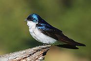 Birds, Insects, Plants and Wildlife of Montana