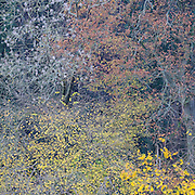 Autumn trees by the River Severn between Upper Arley and Worcester